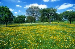 äng för 6 blommor Arkivfoto