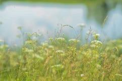 äng för grönt gräs på vit bakgrund, sommarlandskap med i aet av vatten Fotografering för Bildbyråer