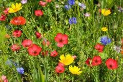 Äng för lös blomma royaltyfria foton