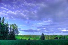 Äng för sommarlandskapbjörk, skog i bakgrunden arkivfoto