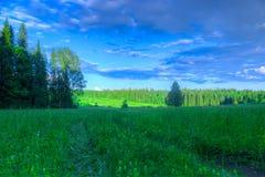 Äng för sommarlandskapbjörk, skog i t Royaltyfri Fotografi