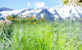 Äng framme av alpin panorama Royaltyfri Foto