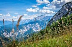 Äng i bergen som ses från de fotvandra slingorna tyska alps fotografering för bildbyråer