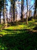 äng i Carpathians Royaltyfria Foton