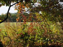 Äng i hösten Fotografering för Bildbyråer