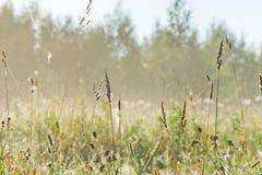 Äng i morgonsolen - 1 Royaltyfria Bilder