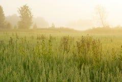 Äng i morgonsolen - 2 Arkivfoton