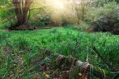 Äng i skog Arkivbild