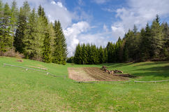 Äng i Trentino Royaltyfri Fotografi