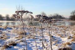 Äng i vintermode royaltyfria bilder