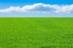 Äng med blå himmel och moln royaltyfria bilder