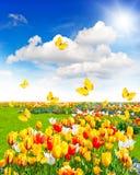 Äng med blandade blommor och fjärilar Arkivbilder