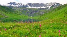 Äng med blommor i rörelse nära till den höga snöig bergsjön stock video