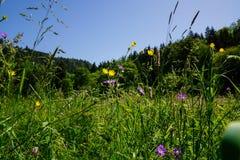 Äng med blommor i sommar arkivbild