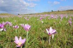 Äng med daggiga blommor Arkivbilder