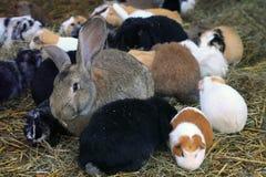 Äng med gnagare, försökskaniner och kaniner Arkivbild