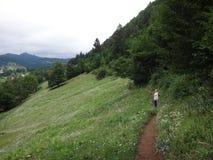 Äng med gräs och blommor i bergen Royaltyfria Foton
