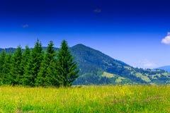 Äng med granträd på bakgrund av det höga berget Royaltyfri Fotografi
