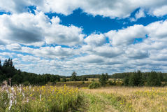 Äng med gula vildblommor och landsvägen Royaltyfria Foton
