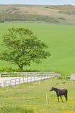 Äng med hästen Royaltyfria Bilder