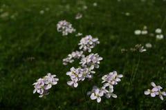 Äng med knäpp blommor royaltyfria foton