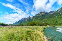 Äng med lupin på en flod mellan berg, Nya Zeeland 32 arkivfoto
