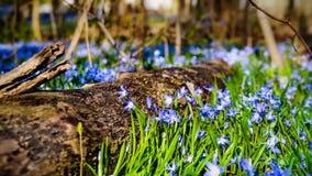 Äng med tidiga blom Royaltyfria Bilder
