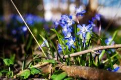 Äng med tidiga blom Royaltyfri Fotografi