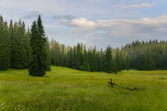 Äng med träd fotografering för bildbyråer
