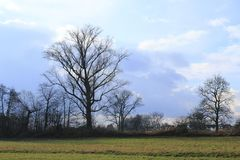 Äng med träd med annalkande stormmoln nära Sandweier Baden-Baden i svart skog Royaltyfria Foton