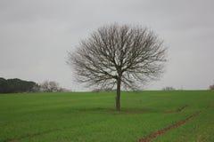 Äng med trädet Fotografering för Bildbyråer