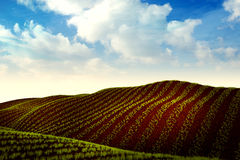 Äng med växande vete eller grönsaker och traktor på horisont Royaltyfria Foton