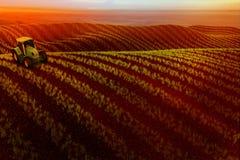 Äng med växande vete eller grönsaker och traktor på horisont Royaltyfri Bild