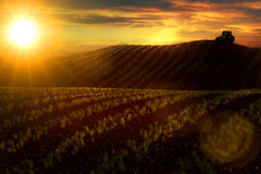 Äng med växande vete eller grönsaker och traktor på horisont Arkivbild