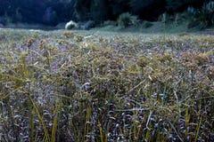 Äng nära en sjö i en skog fotografering för bildbyråer