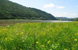 äng nära floden Fotografering för Bildbyråer
