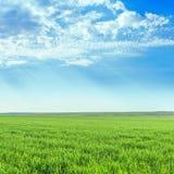 Äng och moln för grönt gräs i blå himmel arkivfoton