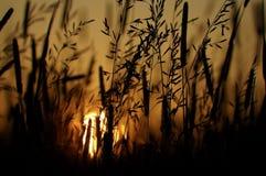 Äng och solnedgång Arkivbilder