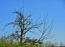 Äng och tree Fotografering för Bildbyråer