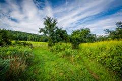 Äng på beaglet Gap, i den Shenandoah nationalparken, Virginia Royaltyfria Foton