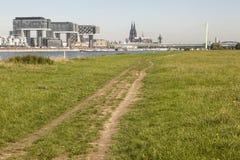 Äng på den Rhine River banken i Cologne, Tyskland arkivfoto