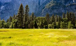 Äng på den Yosemite nationalparken Kalifornien USA royaltyfri foto