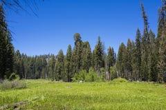 Äng på den Yosemite nationalparken Kalifornien USA royaltyfria bilder