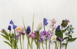 Äng` s blommar herbariumen royaltyfri bild