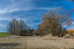 äng som omges av träd på en solig dag arkivfoto