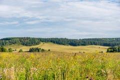 Äng som täckas med lösa blommor och ogräset med skogen, och ett fält på bakgrunden Fotografering för Bildbyråer