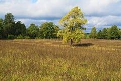 Äng, träd och himmel i ett ljuvt ljus _5 Arkivfoton