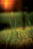 Äng under solnedgång Arkivfoto