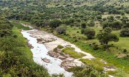 Ängar av Tanzania med floden royaltyfri foto