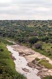 Ängar av Tanzania med floden royaltyfria foton
